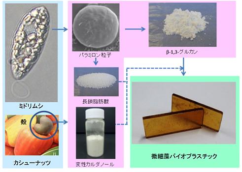 ミドリムシ/カシューナッツ殻から微細藻バイオプラスチックへの製造工程