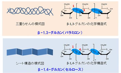 図2?β-1,3-グルカン(パラミロン)とβ-1,4-グルカン(セルロース)の違い